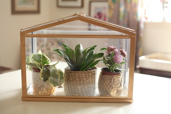 A gold greenhouse with three small plants inside