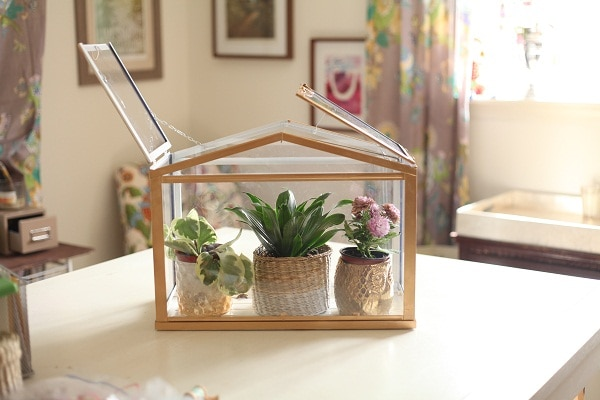 An indoor greenhouse with three small plants inside.