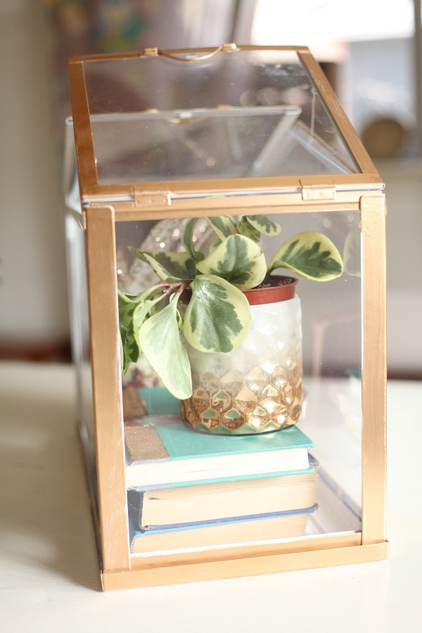 diy gold mini greenhouse from ikea run to radiance. Black Bedroom Furniture Sets. Home Design Ideas