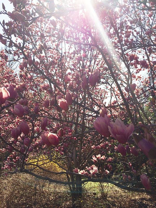 sunrays at arboretum
