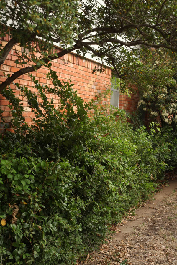 hedge Trimmer review (1 of 6)