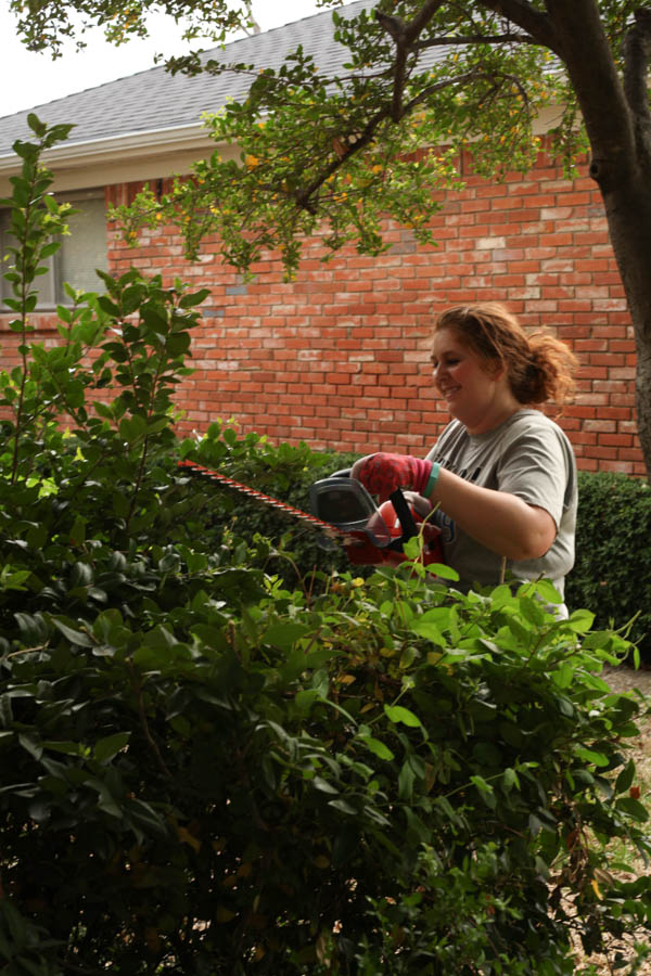 hedge Trimmer review (2 of 6)