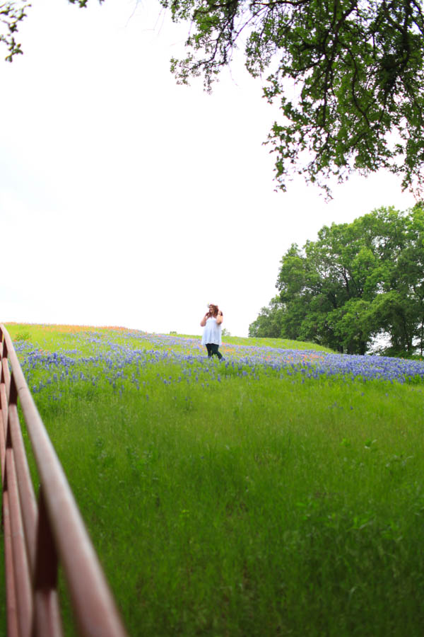 texas bluebonnet trail ennis tx (16 of 21)