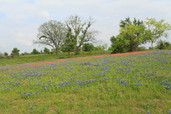 texas bluebonnet trail ennis tx (17 of 28)