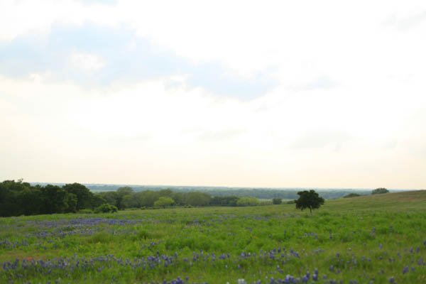 texas bluebonnet trail ennis tx (26 of 28)