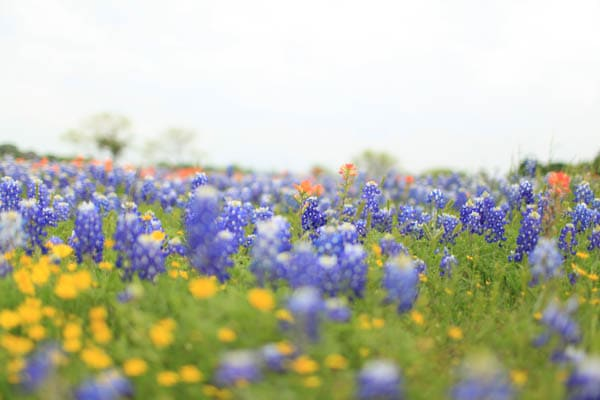 texas bluebonnet trail ennis tx (7 of 28)
