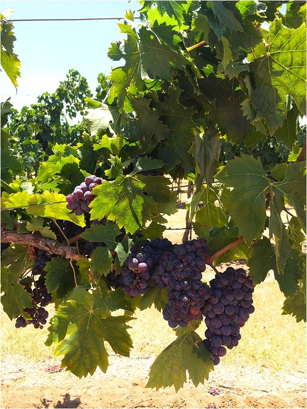 winery reviews fredericksburg tx_0015