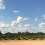 Tips for Wine Tasting & our Trip to Fredericksburg Texas