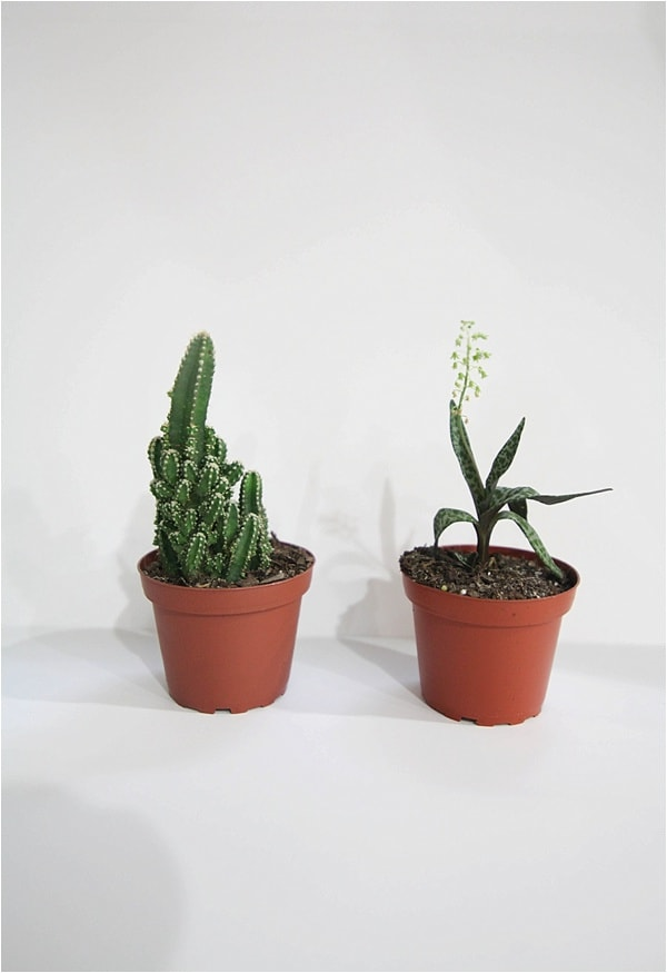 indoor cactus garden_0013