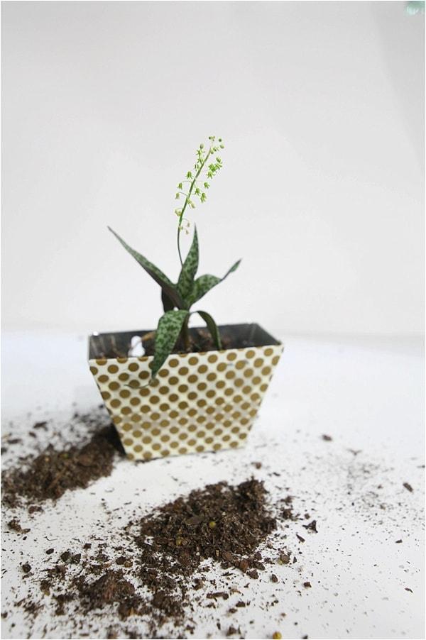 indoor cactus garden_0014