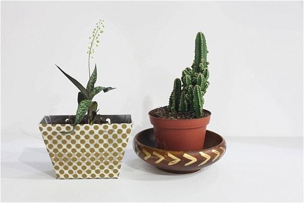 indoor cactus garden_0016
