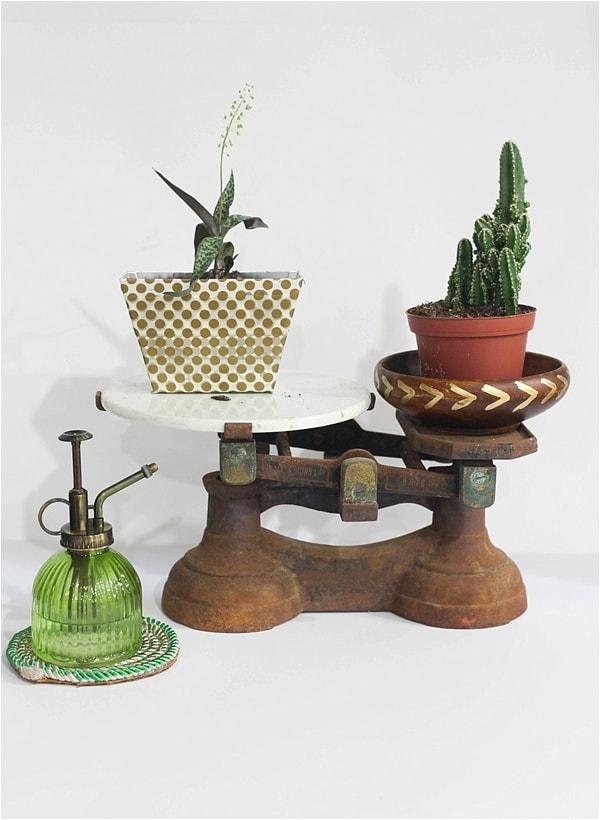 indoor cactus garden_0017