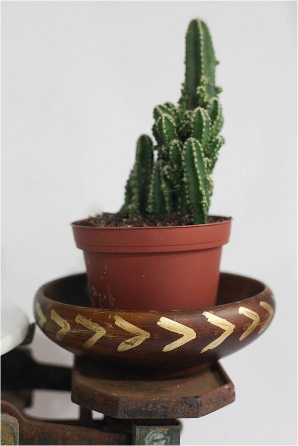 indoor cactus garden_0018