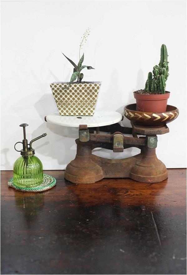 indoor cactus garden_0020