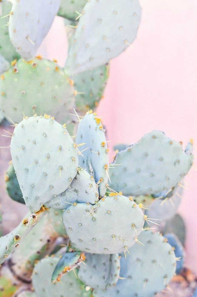 Cute cactus wallpaper with pastel pink background. Girly and fun.