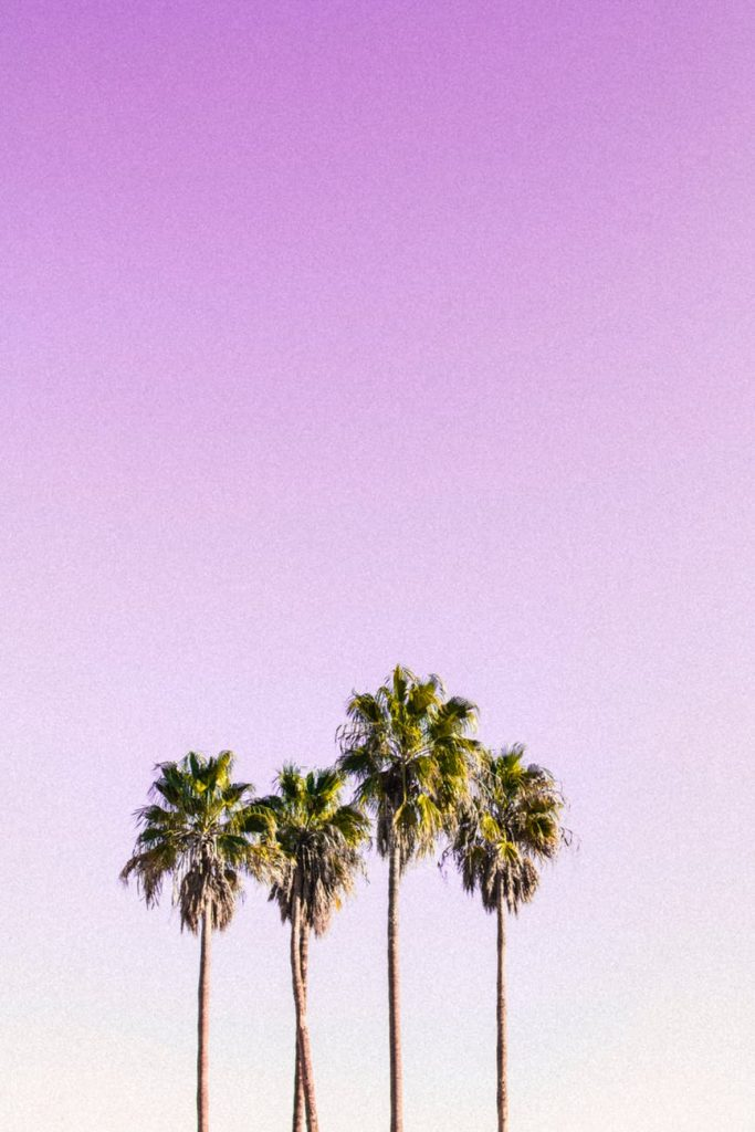 Pretty wallpaper download of palm trees with pastel pink background
