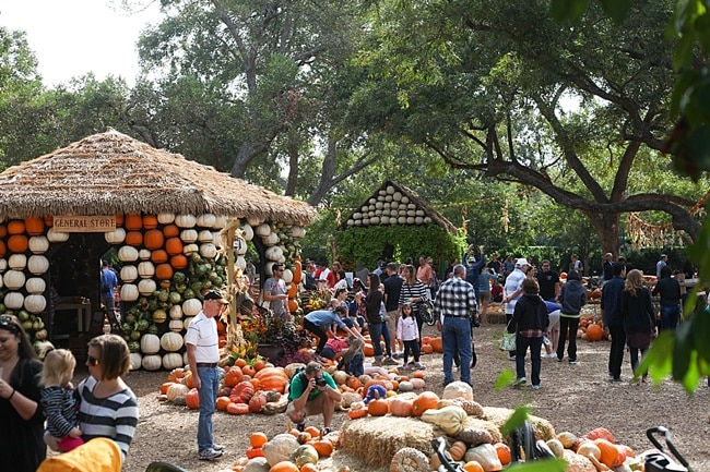The Dallas Arboretum Pumpkin Festival Dating Dallas_0011