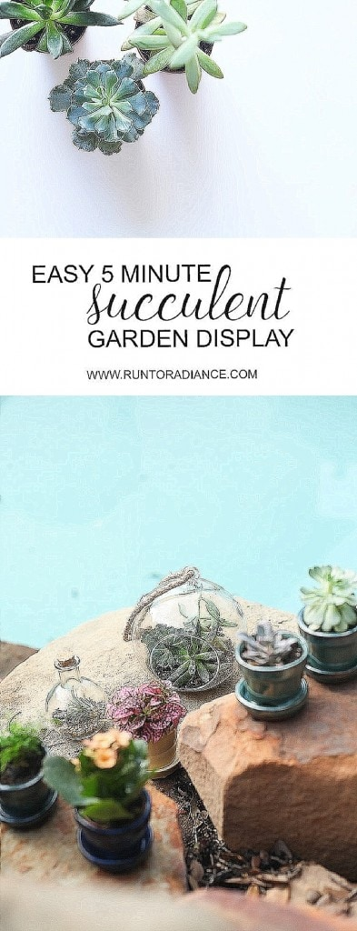 Quick and easy succulent garden - takes less than 5 minutes to make and is really hard to kill, so win/win! :)