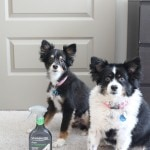 Pet stain removal! STAINMASTER helps remove stains, repel dirt and eliminate odors — perfect for pets!