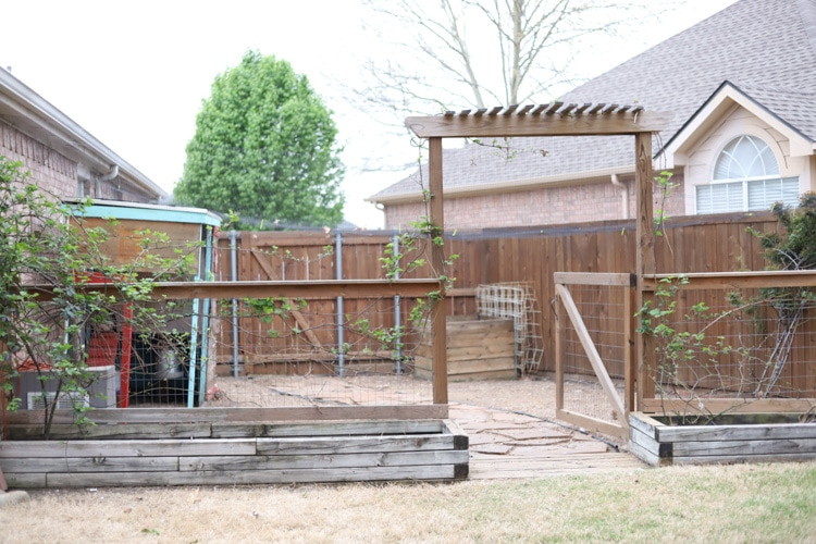 backyard with trellis and chicken coop