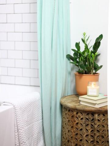 zz plant in a bathroom