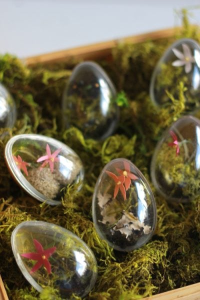 how to make Easter egg terrariums