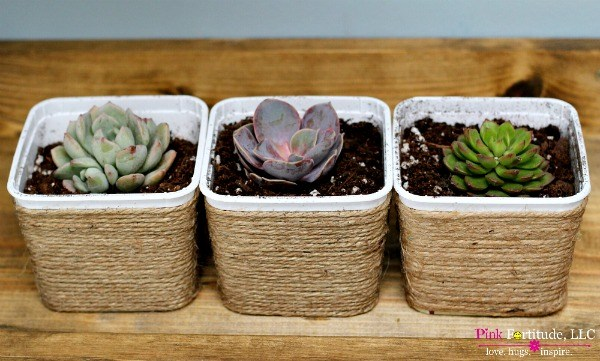 three succulent plants in plastic containers covered in twine
