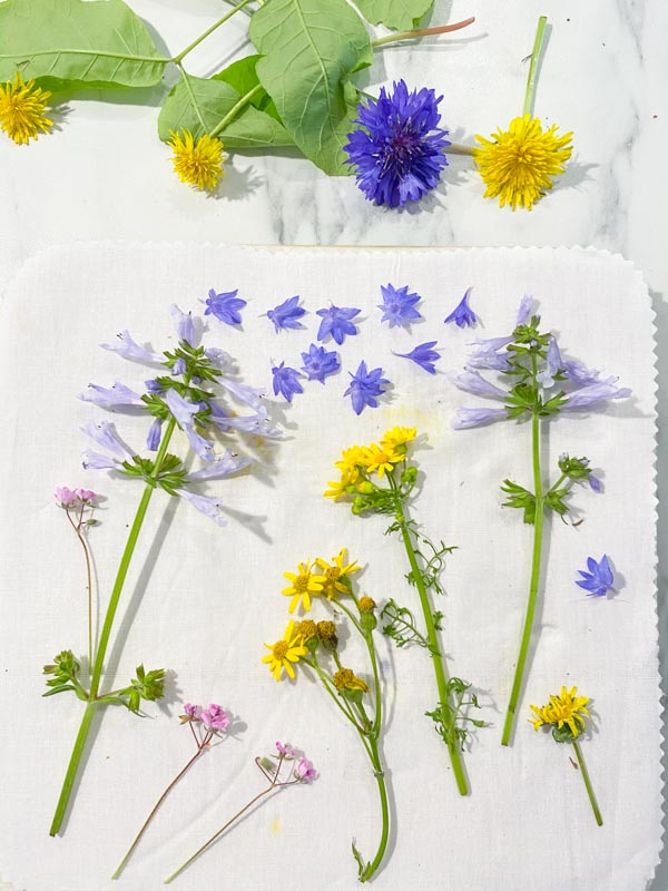A variety of purple, pink and yellow flowers arranged on a fabric liner, ready to be pressed using a microwave flower press.