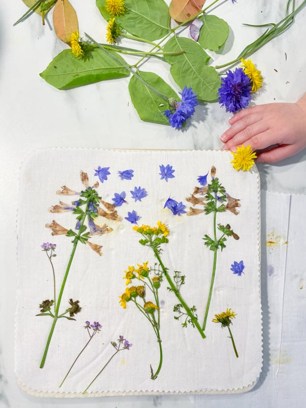 Pressed flowers, with a hand for size reference. Some smaller flowers can lose their color during the pressing process.