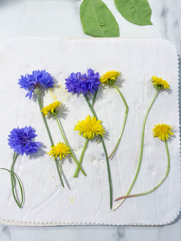 Purple flowers and yellow dandelions arranged on a cotton fabric liner, ready to be pressed.