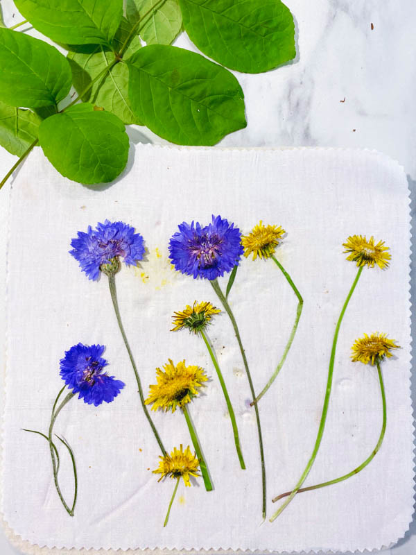 Purple flowers and yellow dandelions that have been pressed using a microwave flower press kit.