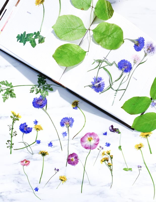 A variety of colorful pressed flowers and leaves displayed in an album.